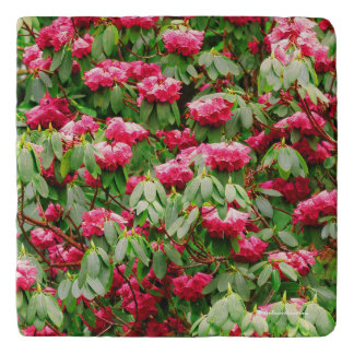 Beautiful Pink Rhododendron Flowers Trivet