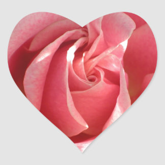 Beautiful pink rose bloom stickers