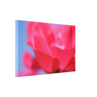 Beautiful Pink Rose Flower Canvas Print
