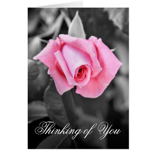 Beautiful pink rose Thinking of you floral card