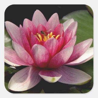 Beautiful pink water lily sticker