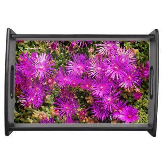 Beautiful Purple Iceplants Serving Trays