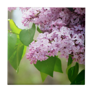 Beautiful Purple Lilacs Tile