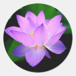 Beautiful purple lotus flower in water round sticker