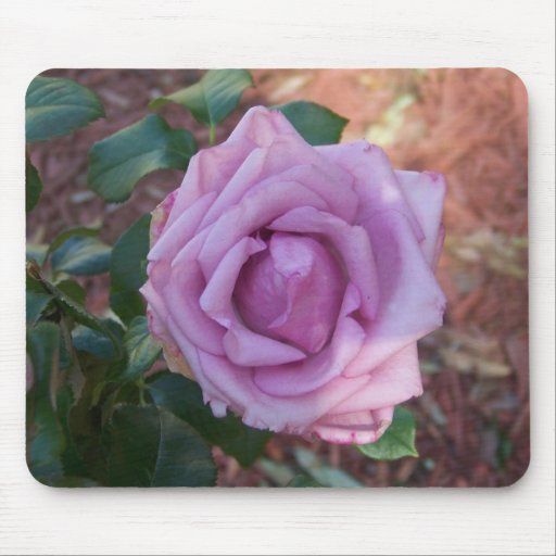 Beautiful Purple Rose Postage Stamp Mouse Mat