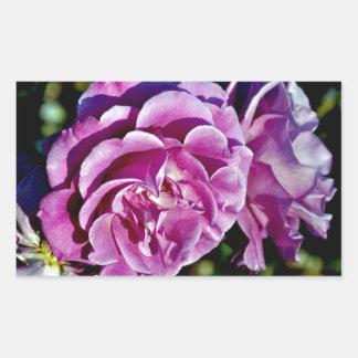 Beautiful purple roses rectangular stickers