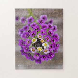 Beautiful Purple Sweet Alyssum Jigsaw Puzzle