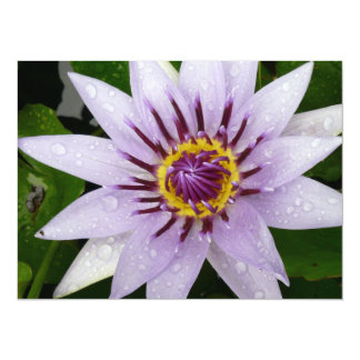 Beautiful Purple Water Lily 14 Cm X 19 Cm Invitation Card
