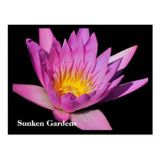 Beautiful purple water lily #900Nw  900 Postcard