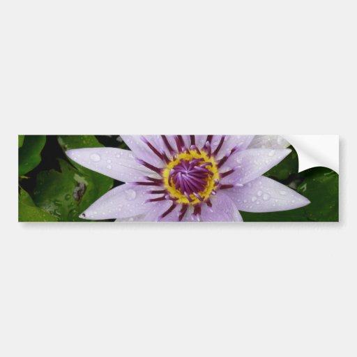 Beautiful Purple Water Lily Bumper Stickers