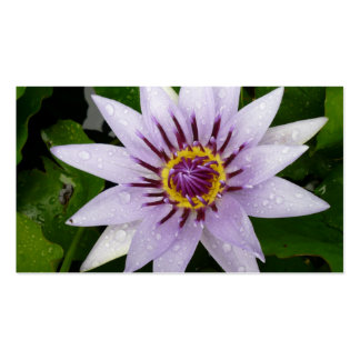 Beautiful Purple Water Lily Business Card Templates