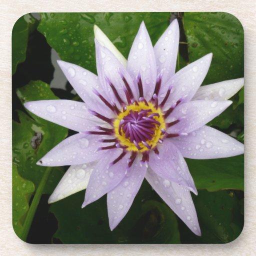 Beautiful Purple Water Lily Coaster