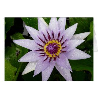 Beautiful Purple Water Lily Note Card