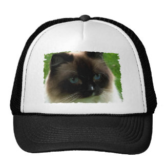 Beautiful Ragdoll Cat Cap