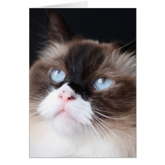 Beautiful Ragdoll Cat Card