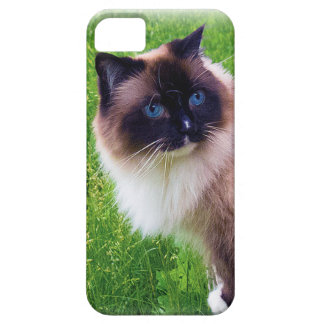 Beautiful Ragdoll Cat Case For The iPhone 5