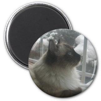 Beautiful Ragdoll Hymalayan Cat Gazing into Winter Magnet