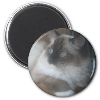 Beautiful Ragdoll Hymalayan Cat Gazing Outside Magnet