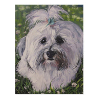 Beautiful Realistic Havanese Dog Art Painting Postcard