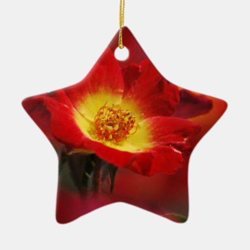 Beautiful red and yellow rose christmas ornament