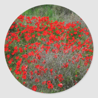 Beautiful Red Anemone Flowers In A Spring Field Classic Round Sticker