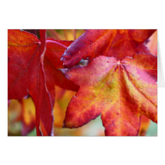 Beautiful red autumn leaves card