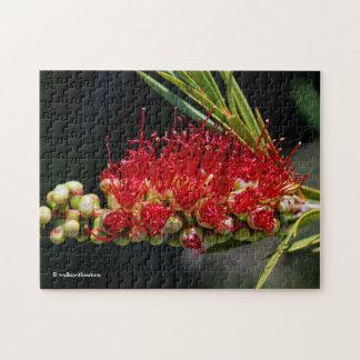 Beautiful Red Bottlebrush Flowers Jigsaw Puzzle