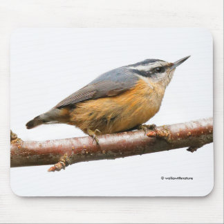 Beautiful Red-Breasted Nuthatch on a Branch Mouse Pad