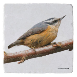 Beautiful Red-Breasted Nuthatch on a Branch Trivet
