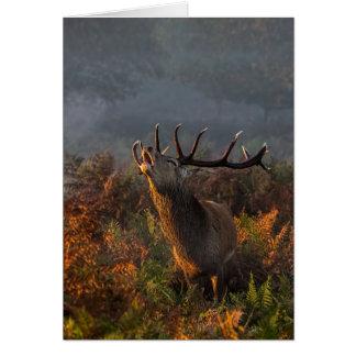 Beautiful Red Deer at Dawn Greeting Card