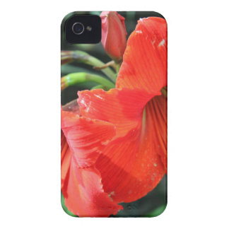 Beautiful Red Flower Photograph iPhone 4 Cover