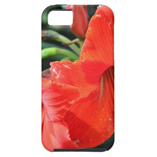 Beautiful Red Flower Photograph iPhone 5 Cover