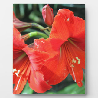 Beautiful Red Flower Photograph Plaque