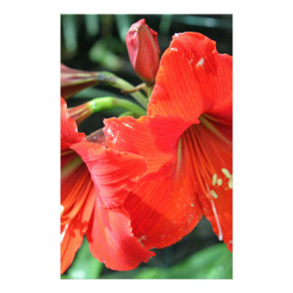 Beautiful Red Flower Photograph Stationery