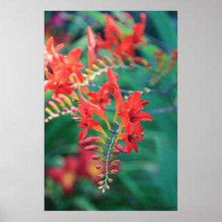 Beautiful Red Flowers Print # 6837