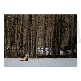 Beautiful Red Fox No. 2 Card