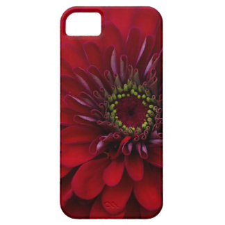 Beautiful Red Garden Zinnia Flower Barely There iPhone 5 Case