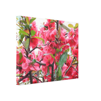Beautiful Red Japanese Quince Canvas Print