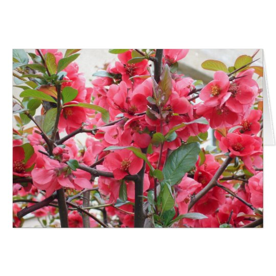 Beautiful Red Japanese Quince Card
