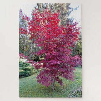 Beautiful Red Maple Tree Jigsaw Puzzle