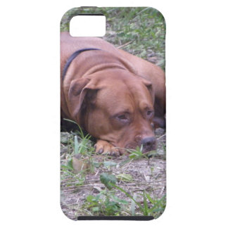 Beautiful Red-Nose Bull Dog iPhone 5 Covers