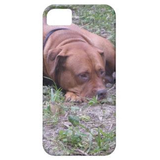 Beautiful Red-Nose Bull Dog iPhone 5 Cover