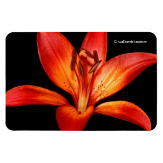 Beautiful Red Orange Asiatic Lily Gran Paradiso Rectangular Photo Magnet