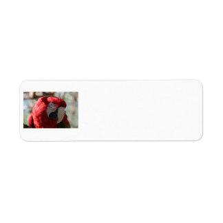 Beautiful Red Parrot label. Return Address Label