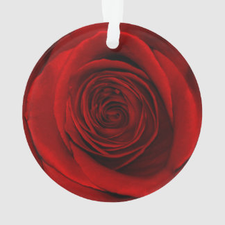 Beautiful Red Rose Flower Floral Photo