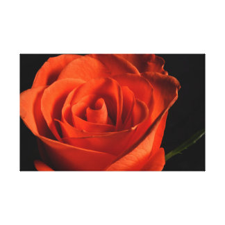 Beautiful Red Rose on black Background Canvas Print