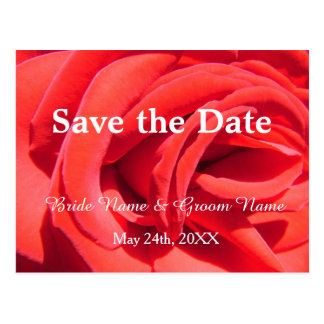Beautiful red rose save the date  wedding invitati postcard