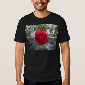 Beautiful red rose tee shirt