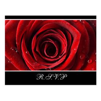 Beautiful Red Rose Wedding RSVP postcard -Black