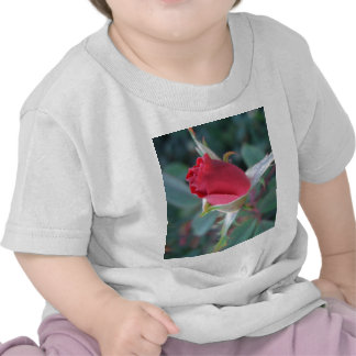 Beautiful Red Rosebud CricketDiane Roses Shirt